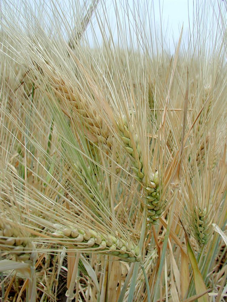 Trąšos, augalų apsaugos priemonės